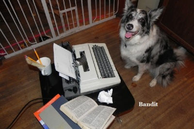 Bandit, helping Mommy with her column.